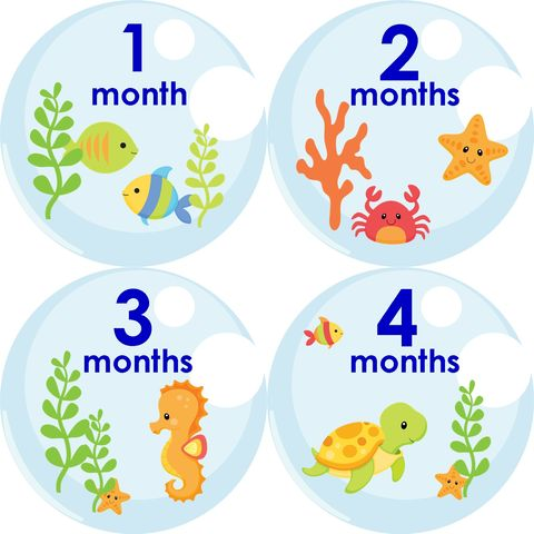 Sea,Animals,Monthly,Birthday,Stickers,,Horse,,crab,,star,fish,,fish,Sea Animals, Sea Horse, Fish, Crabs, Monthly Birthday Stickers for Baby