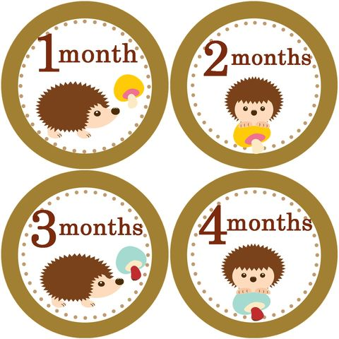 Boys,Hedgehog,Monthly,Birthday,Stickers,boy hedgehog Birthday Stickers, Hedgehog stickers, Hedgehog animal, newborn stickers, birthday stickers
