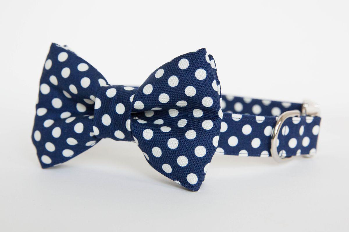 bow tie collar navy polka dot pecan pie puppies