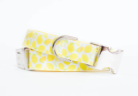Lemony,Lemonade,Dog,Collar,fruit dog collar, dog collar, southern dog collar, lemon, lemonade, lemon dog collar, summer dog collar, yellow dog collar