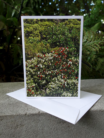 Pohutukawa,Card,New Zealand, NZ, Mark Smith, forest, bush, Northland, Pohutukawa, card, photo, photograph, print, greeting card, envelope