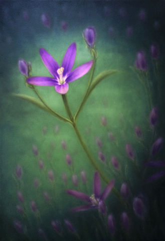 Purple,Beauty,(original),$200,reduced,to,$130!,lady bird's centaury, wildflower, purple flower