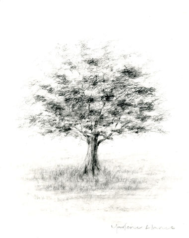 Tree,(original,drawing),tree, pencil