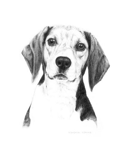 Commission a painting of your pet! - product images  of