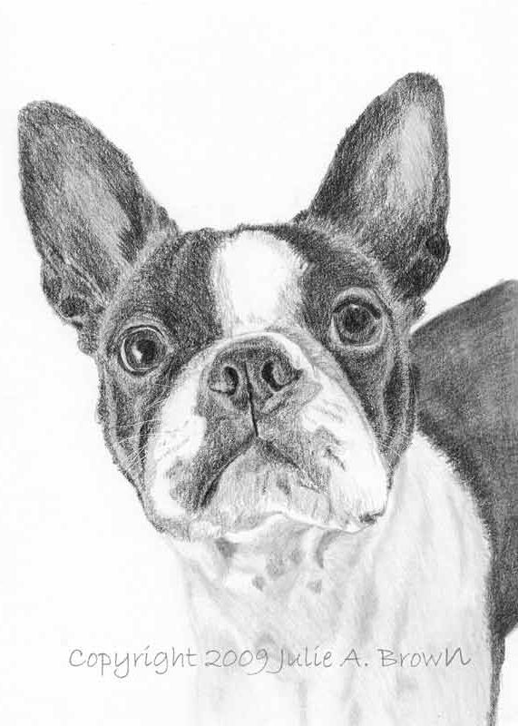 5 x 7 Custom Animal Pet Portrait Sketch Free Shipping - product images  of