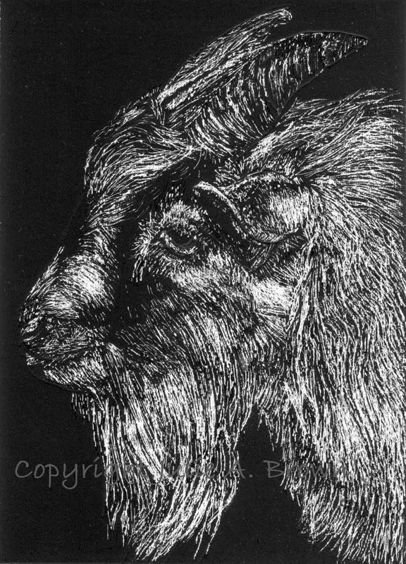Goatee - Original Goat Scratchboard ACEO/ATC - product images