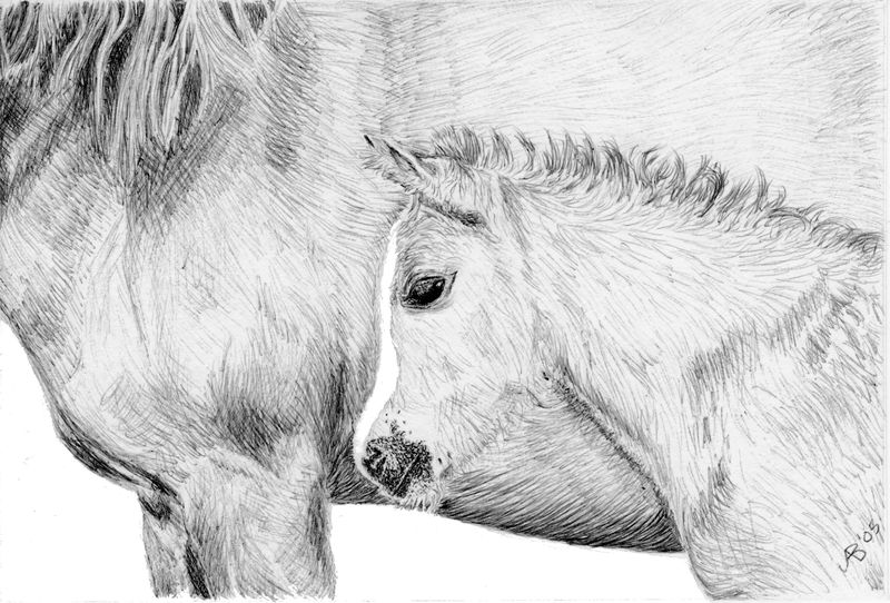 Foal ACEO Art Card Edition Fine Art Reproduction - product images