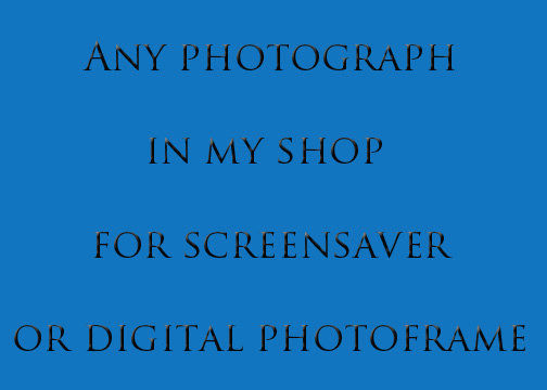 Digital Photograph for Screensaver or Digital Picture Frame - product image