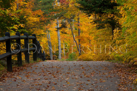 Autumn,Trail,Photograph,Art,Photography,Nature,michigan,scenic,tree_foliage,paradise,picture,print,autumn,bench,color,leaves,golden,trail,photograph,metallic_paper,photo