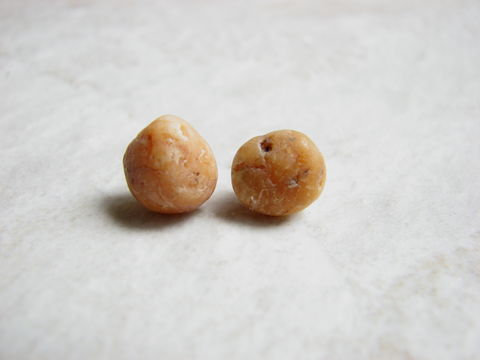Light,Tan,Ocean,Stone,Stud,Earrings,yellow beach stone, tan ocean stone, light tan, stone stud earrings, ocean stone earrings, beach stone earrings, natural stone earrings, eco-friendly earrings, ocean stone jewelry, beach stone jewelry, bits off the beach, bitsoffthebeach, brown beach rock