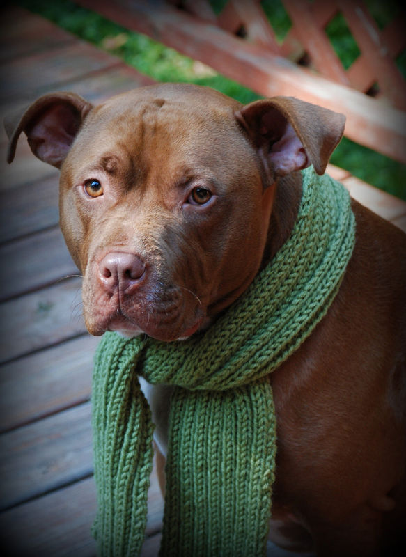 Olive Green Dog Scarf for Medium or Large Dogs Hand Knit Free Shipping - product images  of