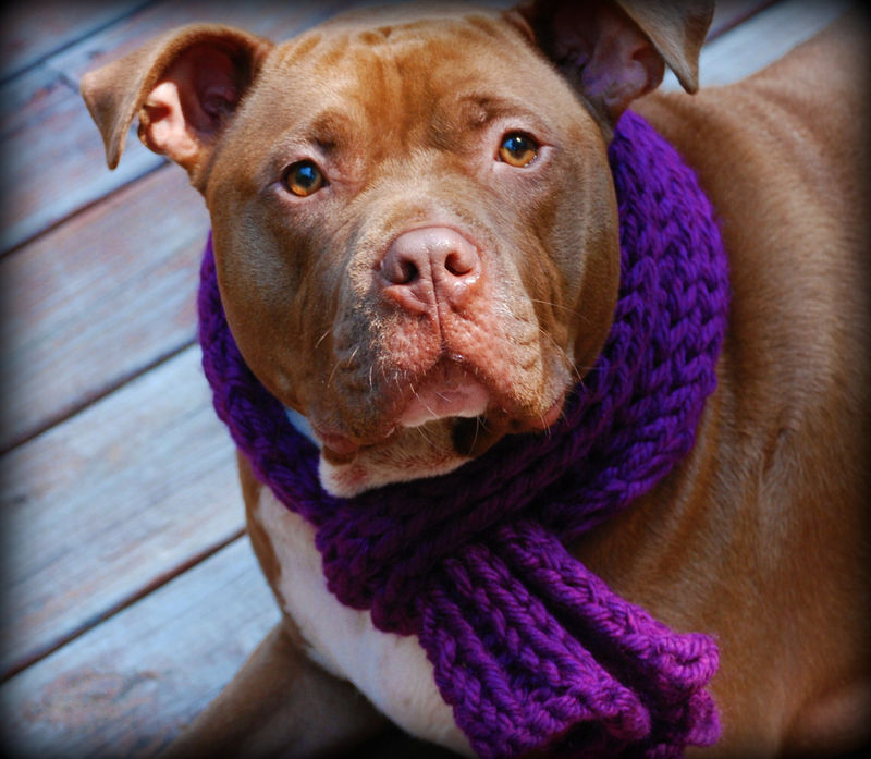 Purple Dog Scarf for Medium or Large Dogs Hand Knit - product images  of