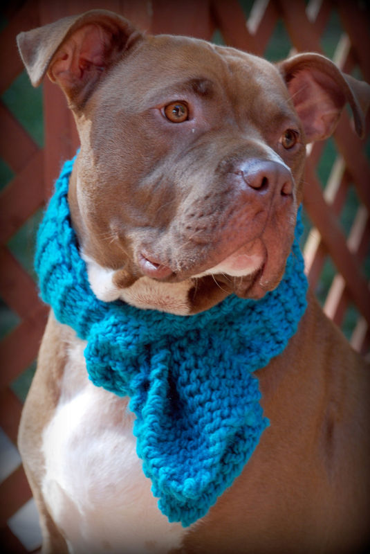 Teal Dog Scarf for Medium to Large Breeds Hand Knit - product images  of
