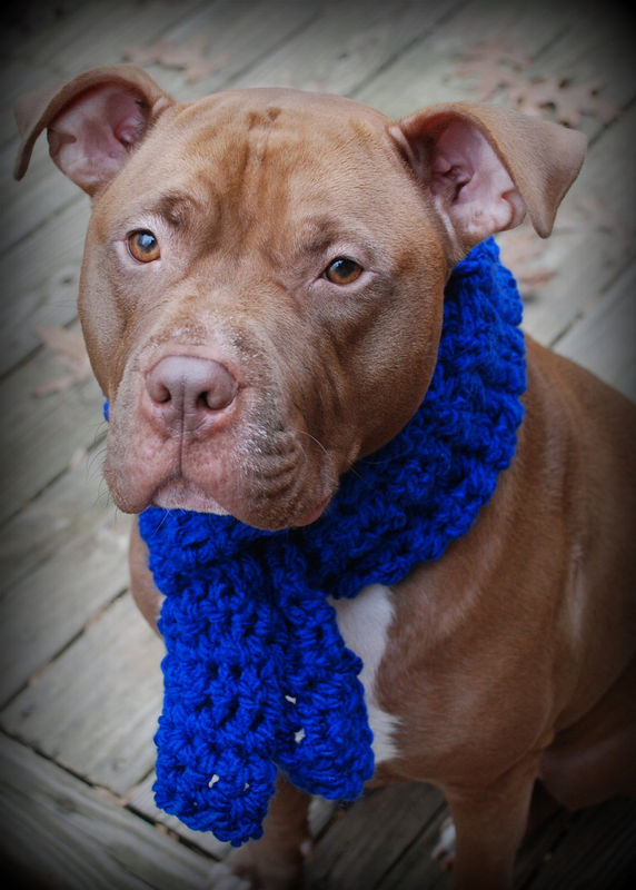 Blue Crocheted Dog Scarf for Large Breeds - product images  of