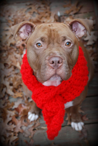 Red,Crocheted,Scarf,for,Dogs,Pets,Accessories,dog_scarf,red_scarf,dog_neckwear,crochet,winter_scarf,large_breed,giant_breed,xxl_scarf,dog_scarves,dog_scarfs,photo_prop,doggie_clothing,dog_accessories,acrylic_yarn