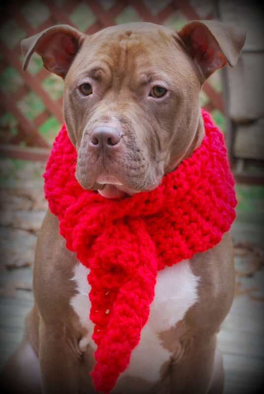 Red Crocheted Scarf for Dogs - product images  of