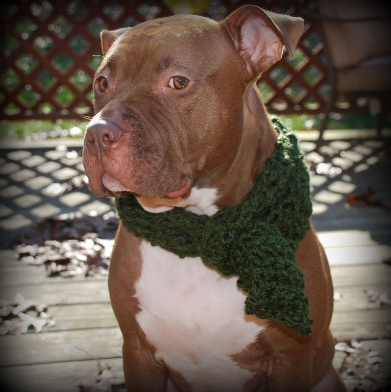 Green Dog Scarf for Medium or Large Breeds - product images  of