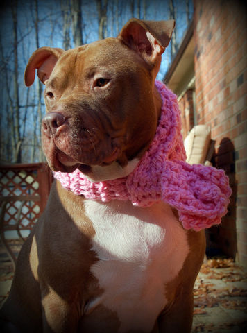 Pink,Dog,Scarf,for,Medium,to,Large,Breeds,Pets,Accessories,dog_scarf,pink,crochet,chunky_scarf,winter_scarf,large_breed,medium_breed,dog_clothing,dog_accessories,dog_clothes,dog_neckwear,dog_scarfs,dog_scarves,acrylic_yarn