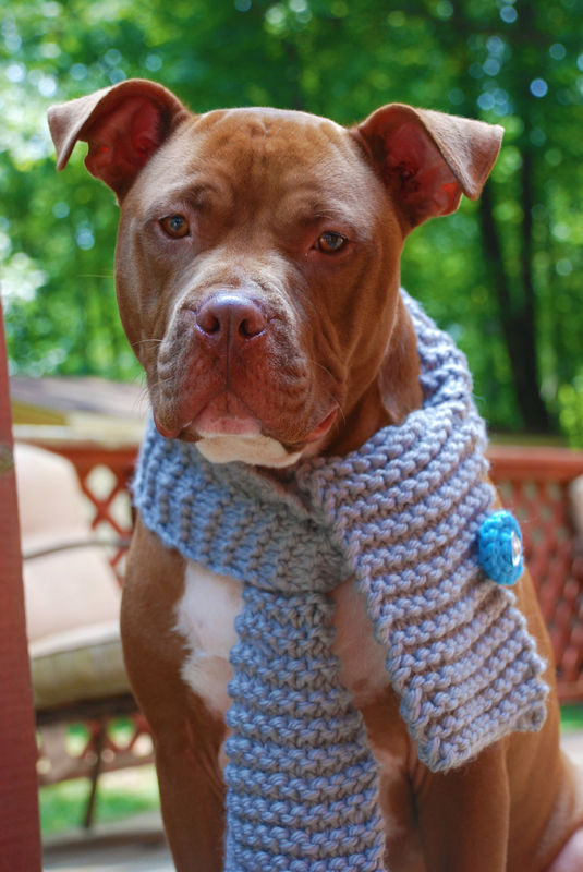Grey Dog Scarf Hand Knit  for Medium or Large Breeds - product images  of