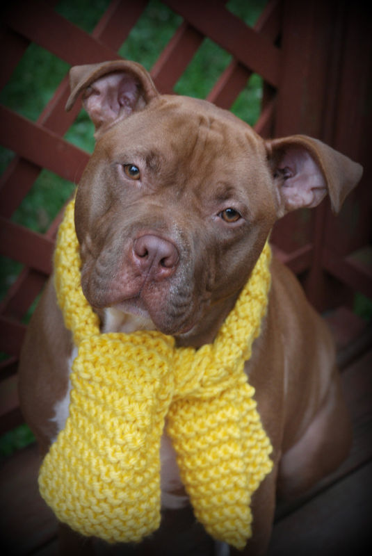 Yellow Dog Scarf For Medium Or Large Breeds Hand Knit