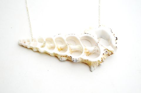 Shell,Slice,Horizon,Necklace,shell, slice, skeleton, for her, necklace, summer, beach, ocean, nautical, jewelry