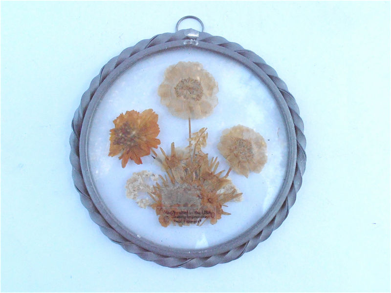 Vintage Pressed Dried Brown Wildflower Wall Hang Round