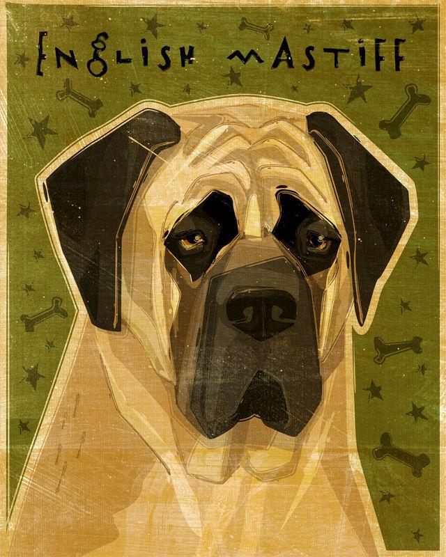 English Mastiff Print by John W. Golden- Print 8\