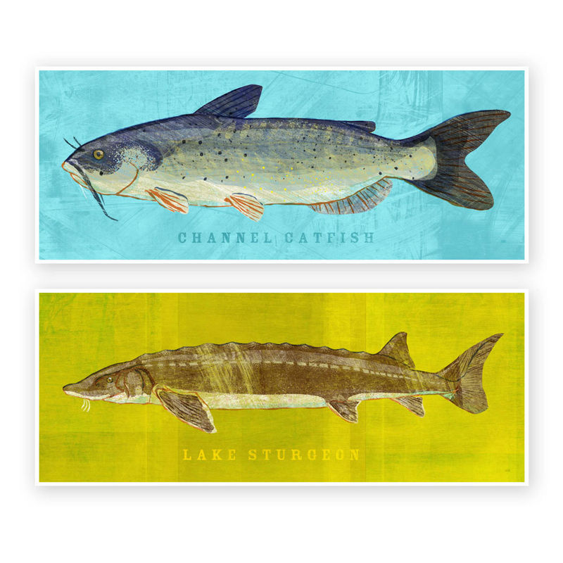 Freshwater fish art the big one fish print pick the for Big fish printing