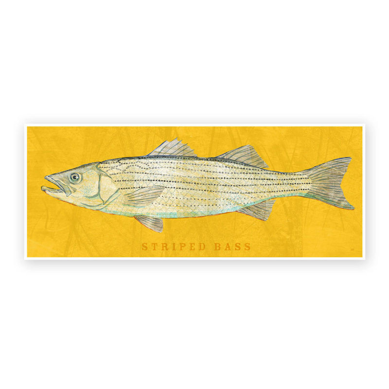 Freshwater Fish Art - Striped Bass Art Print 6.6 in x 18 in - Fish Decor - Fathers Day Gift for Dad - Gift - Kids Fish Art - Fishing Art - product images