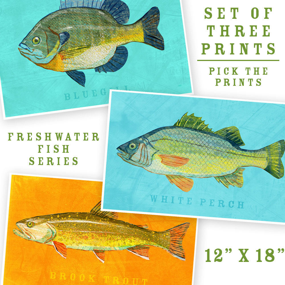 Freshwater fish art - Fish Artwork 3 Big Fishes Set Of