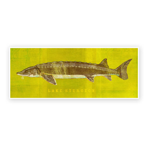 Freshwater,Fish,Art,-,Lake,Sturgeon,Print,6.6,in,x,18,Decor,Fathers,Day,Gift,for,Dad,Kids,Fishing,Digital,Fish_Decor,Coastal_Art,Freshwater_Fish_Art,Fish_Print,Fathers_Day_Gift,Gift_For_Dad,Kids_Fish_Art,Lake_Sturgeon_Art,Sturgeon_Art_Print,Dad_Gift,Paper,Ink