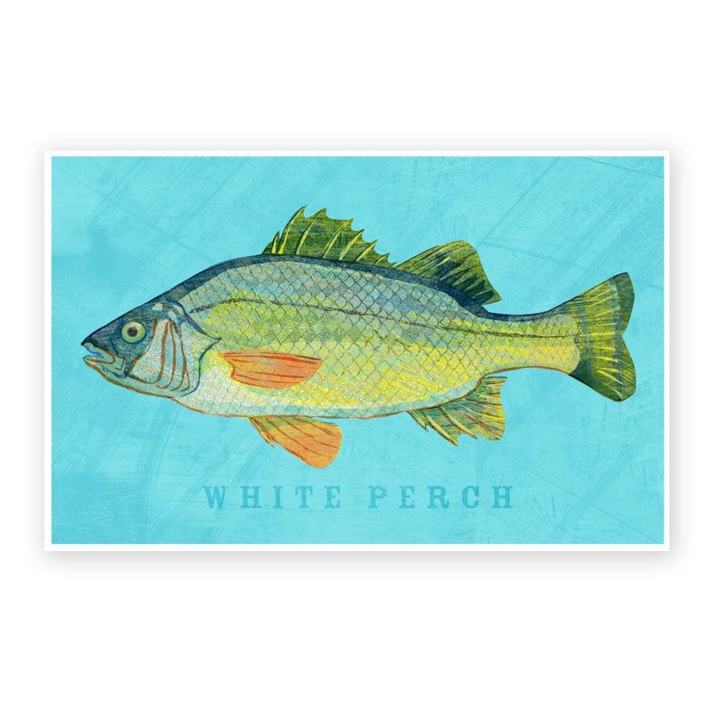 Freshwater fish in alabama - White