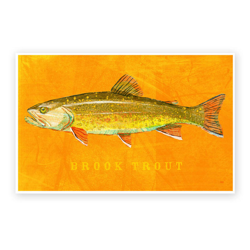 Brook Trout Art Print - Freshwater Fish Art - 8