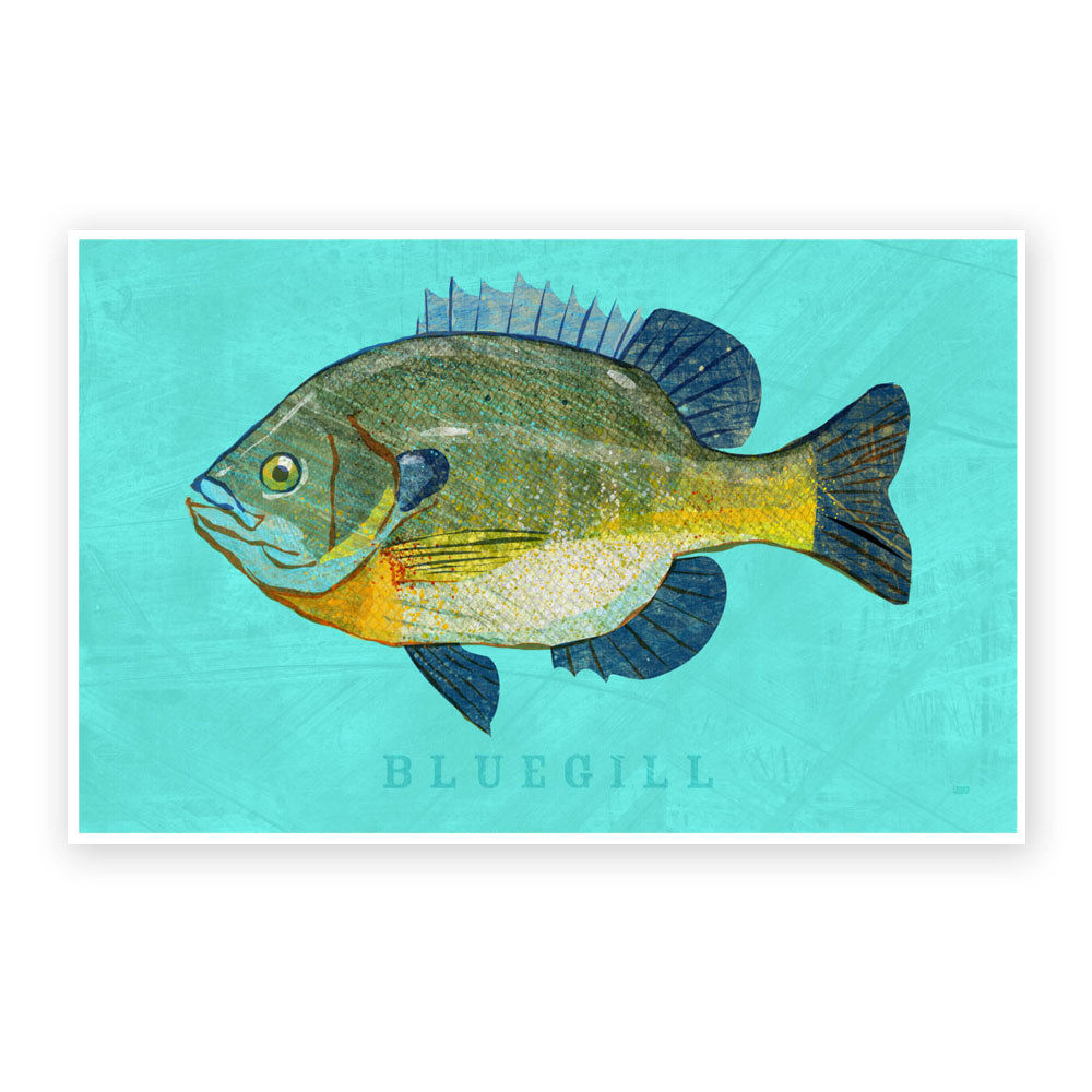 Freshwater fish art - Bluegill Art Print Freshwater Fish Art 8 X 12 Fish Decor Beach House Decor Man Cave Art Fathers Day Gift For Dad Fish Gifts