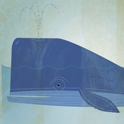 The,Colossal,Whale,Print,8,in,x,10,Children,Art,illustration,print,digital,critter,johnwgolden,art,whale,blue,ocean,sea,nursery,paper,ink