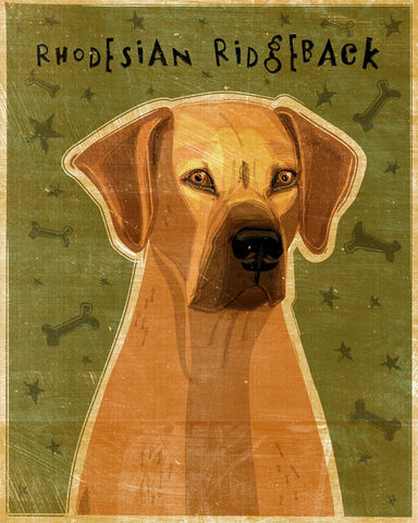 Rhodesian,Ridgeback,Art,-,Print,8,in,x,10,Illustration,whimsical,cute,animals,boxer,dog_art,pet,puppy,canine,rhodesian_ridgeback,paper,ink