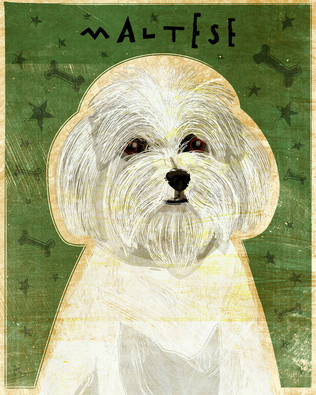 Maltese - Dog Art Print 8 in x 10 in - product images