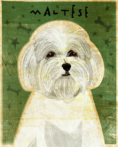 Maltese,-,Dog,Art,Print,8,in,x,10,Illustration,whimsical,cute,animals,dog_art,pet,puppy,Dog_Print,maltese,paper,ink