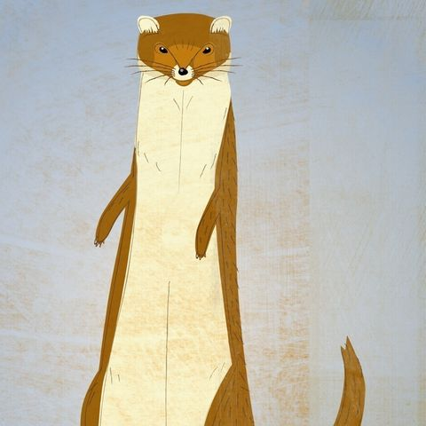The,Shady,Weasel,Print,Children,Art,illustration,print,digital,animal,art,weasel,paper,ink