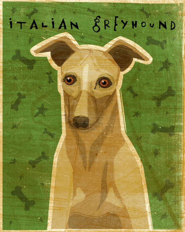 Italian Greyhound (Fawn) - Dog Art Print 8 in x 10 in - product images