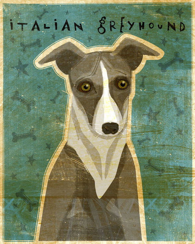 Italian Greyhound (Blue or Gray) - Dog Art Print 8 in x 10 in - product images