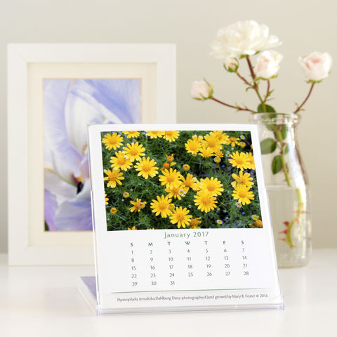 Garden,Flowers,Photography,2017,Desk,Calendar,with,cd,case,easel,2017 calendar, cd calendar, 2017 desk calendar, garden flowers photography, floral art, macro photography, cd case easel calendar, small calendar, desktop calendar,  nature photos, Mary Foster Creative
