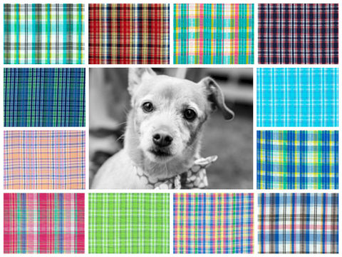 The,Preppy,Madras,Madness,Dog,Collar,lilly pulitzer, preppy, unique, fun, bright, feminine, masculine, stylish