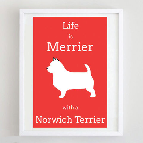 Life,is,Merrier,With,A,Norwich,Terrier,Print,Norwich Terrier Print, Life is Merrier with a Norwich Terrier, Terrier Print, Terrier Art, Terrier Poster