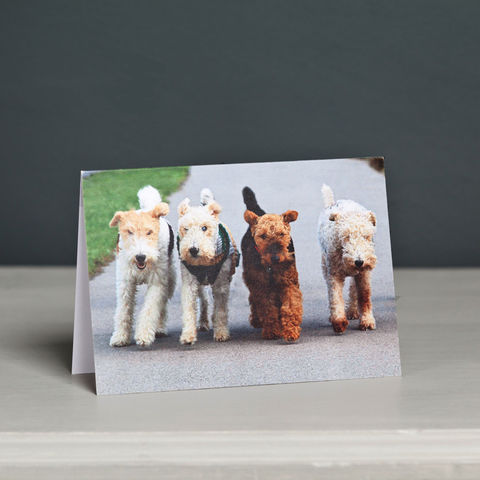 Four,Terriers,Greeting,Card,Fox Terrier Card, Welsh Terrier Card, Wire Fox Terrier Card, Wire Hair Fox Terrier Card