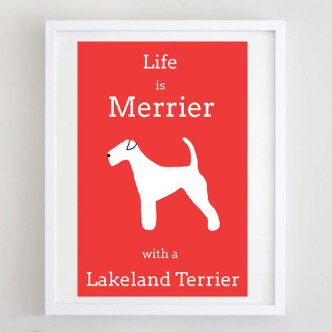 Lakeland,Terrier,Print,Life is Merrier with a Lakeland Terrier, Lakeland Terrier Art
