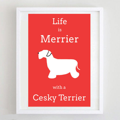 Cesky,Terrier,Print,Life is Merrier with a Cesky Terrier, Cesky Terrier Art