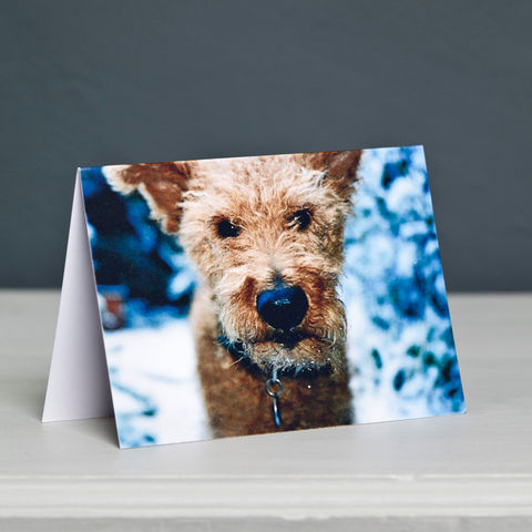 Terrier,Dog,Christmas,Card,Irish Terrier Christmas Card, Terrier in Snow Card, Dog Christmas Card