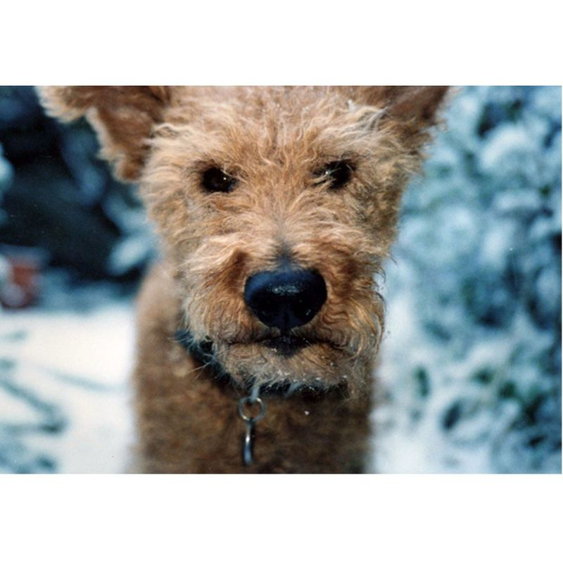 Terrier Dog Christmas Card Forever Foxed