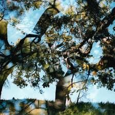 Bird,By,Snow,‎–,Common,Wealth,LP,Bird By Snow, Common Wealth, Gnome Life, LP, vinyl